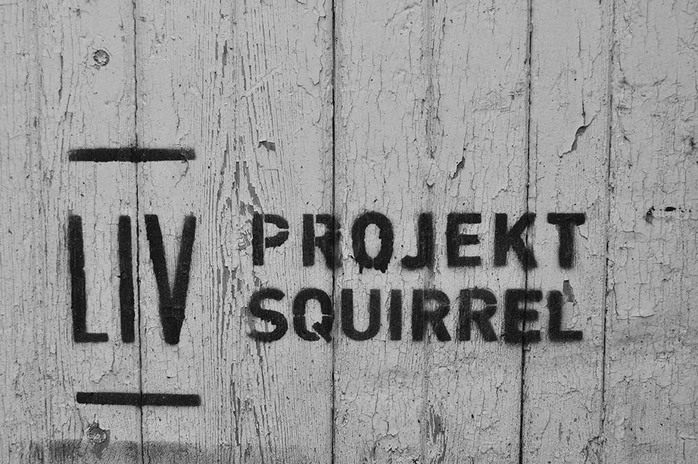 View 4 Squirrel Works